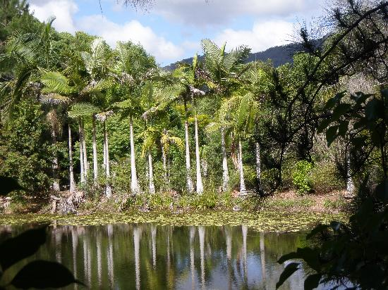 Amazing Wollumbin Palms Retreat at Mt Warning: Kings Lodge lake