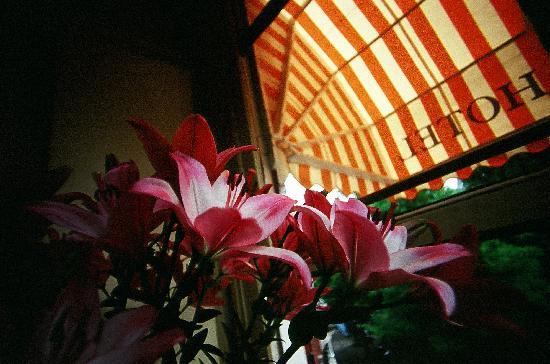 โฮเต็ลมิวเซียมซิชท์: hotel museumzict1