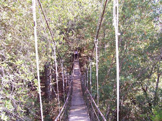Mayacama Mountaintop Retreat / Clair de Lune Cottage: bridge to star gazer cabin