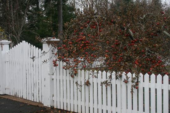 Four Seasons Retreat : Cute apple tree and fence