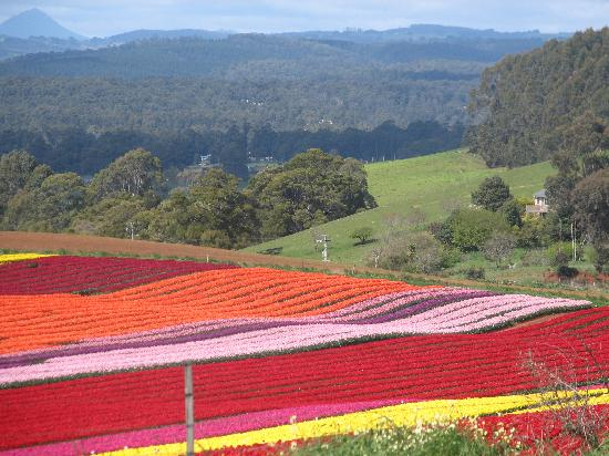 Harbour Houses : Tulip Farm near Boat Harbour