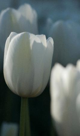 Canberra, Australia: Floriade Spring festival in September