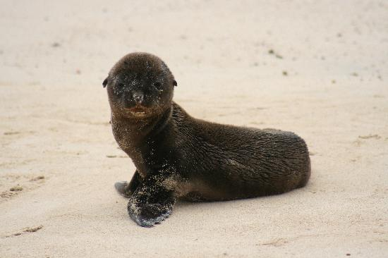 Baby Sea Lion - Picture of Galapagos Islands, Ecuador ...