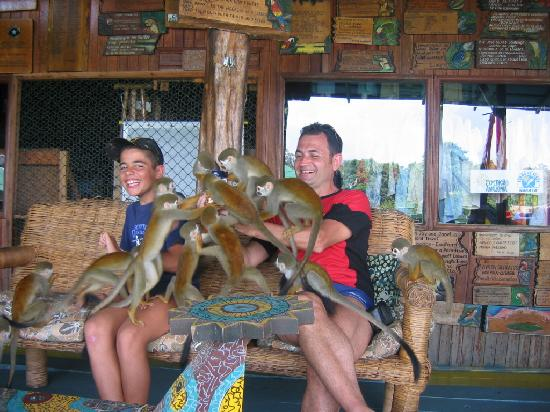 Штат Амазонас: Monos en Amazonas