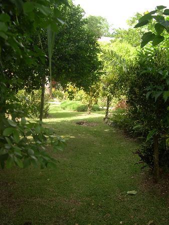 Negril Yoga Centre: Garden Path