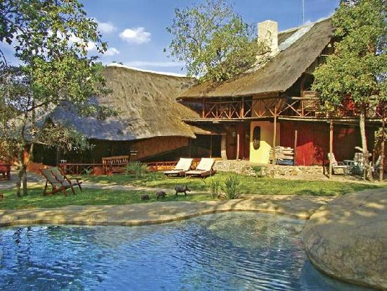 Pezulu Tree House Game Lodge: Pezulu Tree House Lodge,Hoedspruit, Limpopo, South Africa, Africa