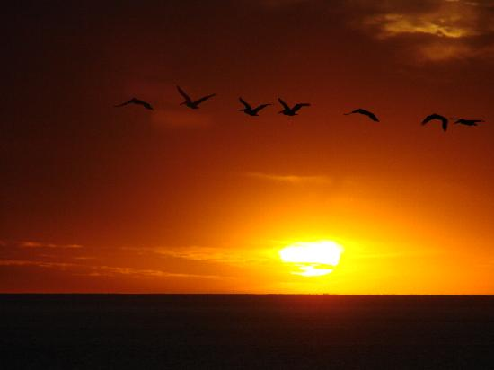 Tamarack Beach Resort and Hotel: Carlsbad Pelican Sunset