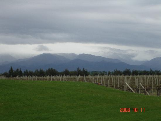 Andeluna Cellars: View of the Andes from the winery