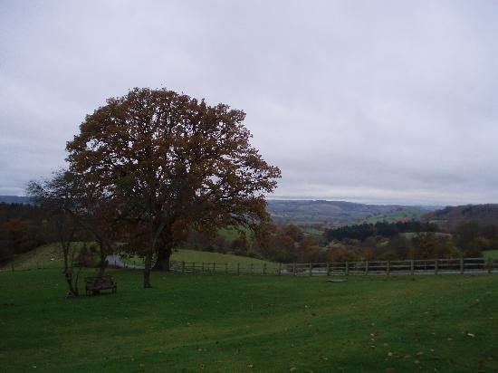 The Bringewood: View from the patio area