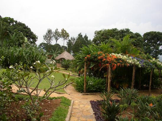 Bukoba, Tanzania: Balamaga garden