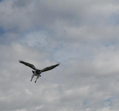 Córdoba, Argentinien: Aguila Mora- en traslasierra