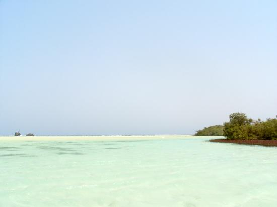 Nabq Bay, Egypt: Mangroves Nabq