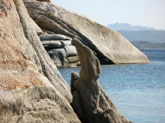 Caprera, Italien: il coccodrillo