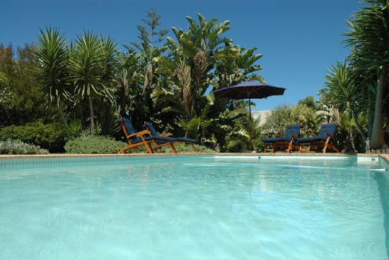Secret Garden Guesthouse: Pool and garden