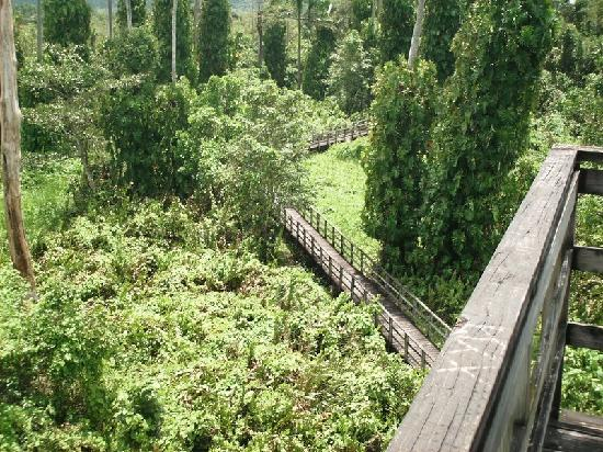View of boardwalk from Tower at Royal Palm Reserve