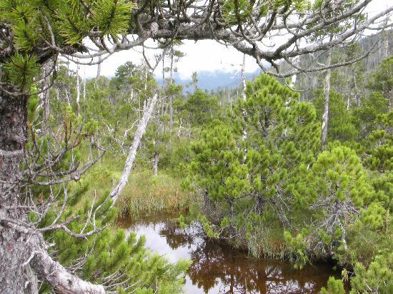 Edna Bay, AK: Wetland