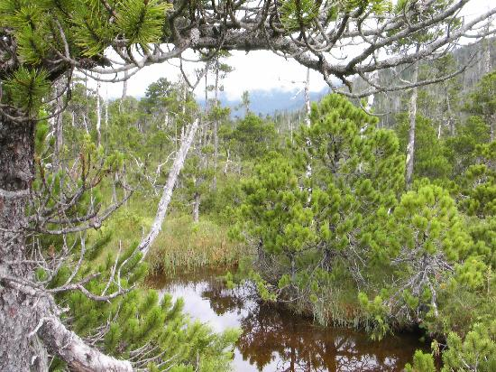 Edna Bay, Alaska: Wetland