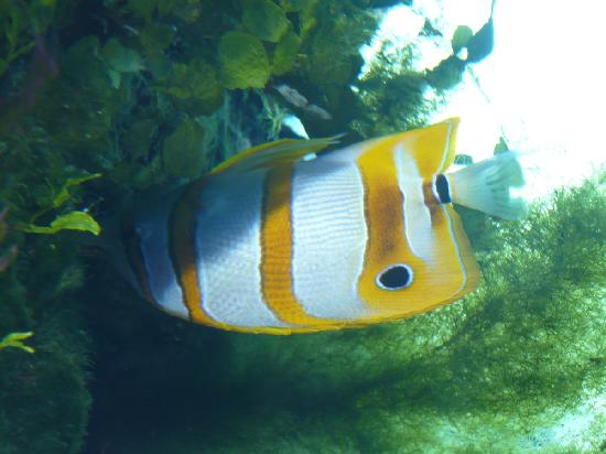 Akwarium Gdynskie MIR: Fish