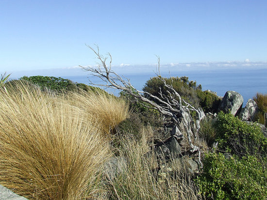 Toetoes Bay, Fortrose, NZ