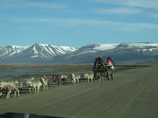 Longyearbyen, Norwegen: Dogsledding can also be done in the summermonths, but is much better during winter on snow.