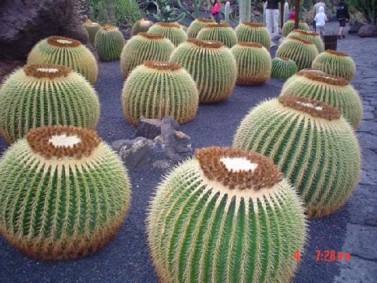Jardin de cactus picture of lanzarote canary islands - Jardin de cactus ...