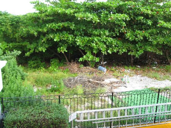 Caribbean Princess Resort: Trash outside hotel