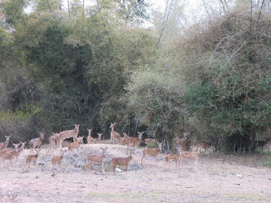 반디푸르 사진