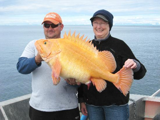 Alaska's Kodiak Island Resort: 31 lb.Yelloweye Rockfish
