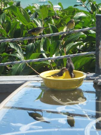 Stonegarden Cottage: The Banana birds came to eat sugar every day.
