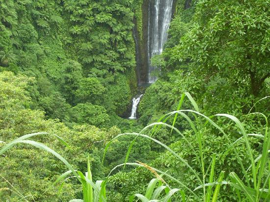 Apia, Samoa: Waterfall up in the mountains