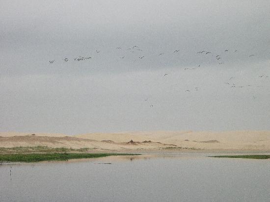 Stato di Santa Catarina: médanos en la Lagoa Garopaba do Sul