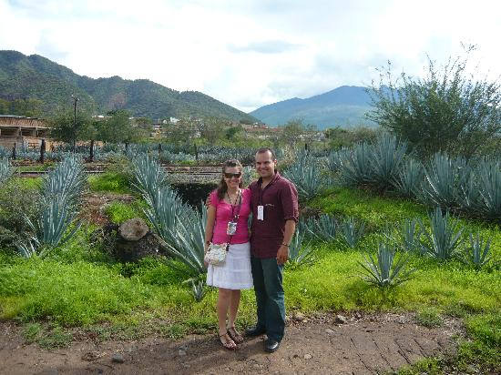 Tequila Express: nice view of agaves