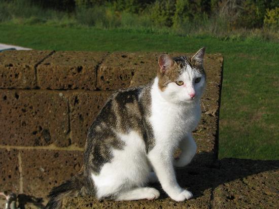 Locanda Palazzone: the friendly cat