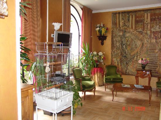 Hotel des Arts: el loro del hotel