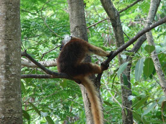 Doany Beach: lemurien a Nosy Komba