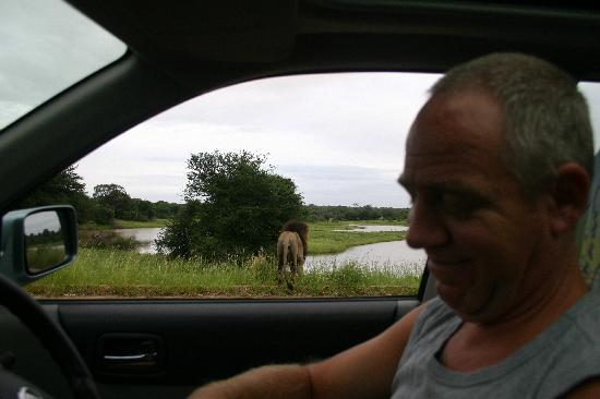 Bakkers Bed and Breakfast : Cees our fiieldguide during a private safari tour
