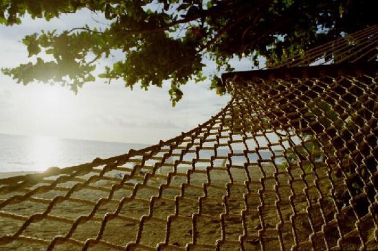 Malolo Island Resort: View from the Hammock