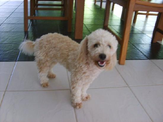 Lanta Island Resort: resident puppy - very sweet
