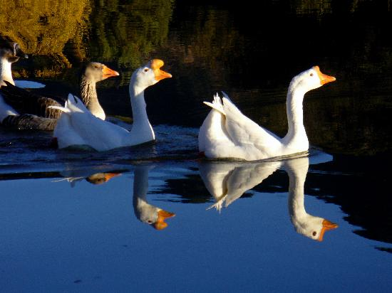 Sunglow Ranch - Arizona Guest Ranch and Resort: Pond inhabitants