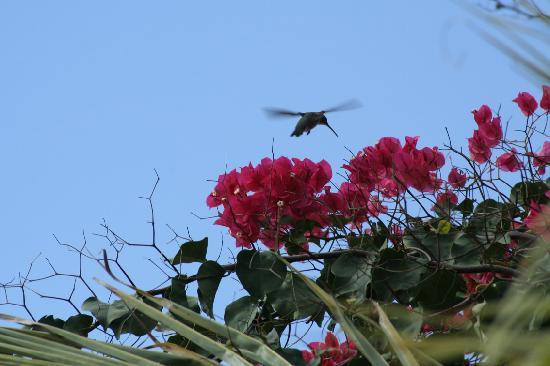Baia da Traicao, PB: colibrì presso pousada acajutibirò