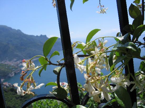 Giardino dei Limoni B&B : Vue de la terrasse