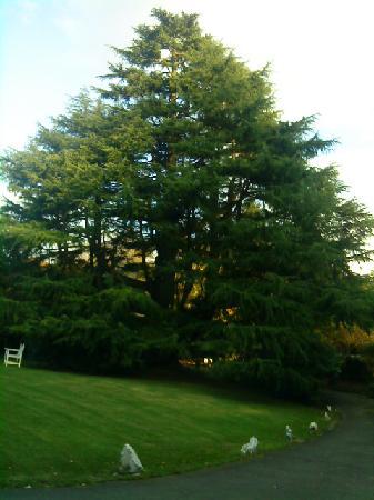 Cedar Manor Hotel and Restaurant: The Cedar Tree