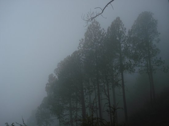 Khajjiar, Indien: Ghostly Trees