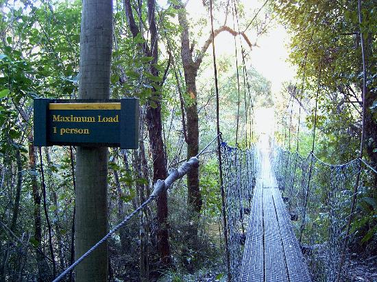 Swing bridge on Queen Charlotte Track