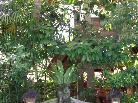 Ketut's Place: if you look carefully, our room in the trees