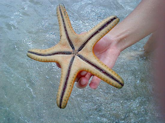 The Oasis Beach: Back of starfish