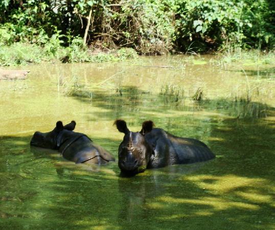 Gaida Wildlife Camp: spotted rino