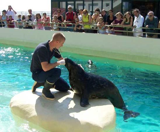 Aquarium de Biarritz : Repas des phoques