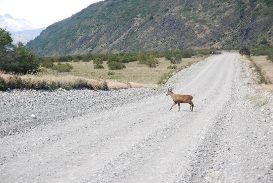 explora Patagonia : Huemul