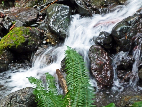 Barnes Creek : Water cascading